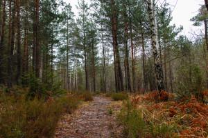 Senhöst i skogen