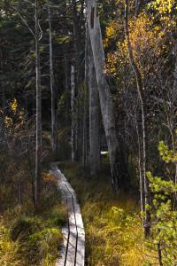 genom skogen