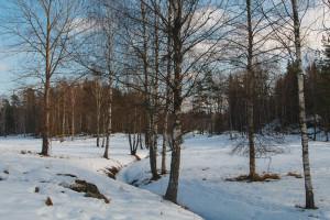 Tyresta vinterlandskap